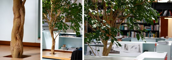 Indoor Trees At The Office