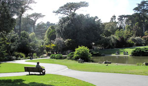 SF Botanical Gardens Pathways